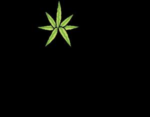 Dope Photo Logo